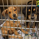 "Each week, the <i>Flyer</i> will feature adoptable dogs and cats from Memphis Animal Services. All photos are credited to Memphis Pets Alive. More pictures can be found on the <a href=""https://www.facebook.com/MemphisPetsAlive"" target=""_blank"">Memphis Pets Alive Facebook page.</a><br>"
