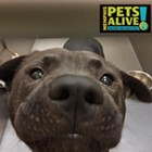 """Each week, the Flyer will feature adoptable dogs and cats from Memphis Animal Services. All photos are credited to Memphis Pets Alive. More pictures can be found on the <a href=""""https://www.facebook.com/MemphisPetsAlive/"""" target=""""_blank"""">Memphis Pets Alive Facebook page.</a><br>"""