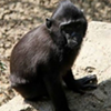 Search For Missing Monkey Takes Over Memphis Twittersphere