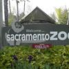 Memphis Zoo's Tiger Says He Isn't Sorry