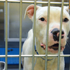 Memphis Pets of the Week (March 23-29)