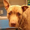 Memphis Pets of the Week (May 26-June 1)