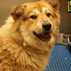 Memphis Pets of the Week (Sept. 1-7)