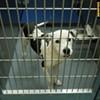 Memphis Pets of the Week (Oct. 20-26)