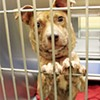 Memphis Animal Services sees rise in intake and adoptions