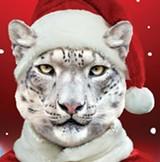 zoo-lights-banner-graphic.jpg