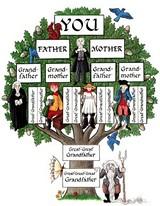 cd45d444_genealogy_tree.jpg