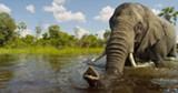 wildafrica.jpg
