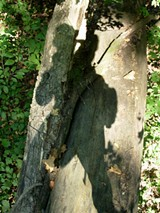 shadow_on_leaning_trees_jpg-magnum.jpg