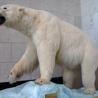 Wharton Speaks to Friends, Employees, and a Stuffed Polar Bear