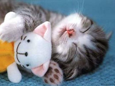 kitten-pics-cute-kittens-16296555-800-600.jpg