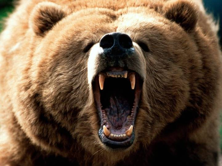 feeling_grizzly1600x1200.jpg