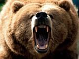feeling_grizzly1600x1200.jpg