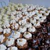 Worldwide Vegan Bake Sale Sneak Peek