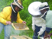 ν Beekeepers inspect a bee-laden frame from a hive at Detroit's D-Town Farm.