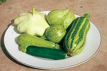 foodfocus1-1.jpg
