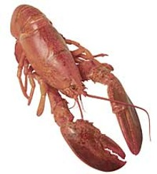 food_lobsterjpg