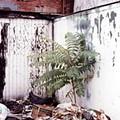 Ghetto palm