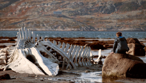 'Leviathan' takes on Russian corruption