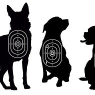Detroit will pay $250,000 in dog shooting settlement