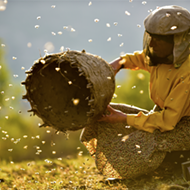 Cinema Detroit to host advance screening of lauded beekeeping doc 'Honeyland'