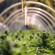 Michigan marijuana testing lab reaches settlement to eventually reopen