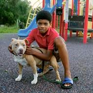 Detroit pit bull attacks shine light on owner negligence, enforcement