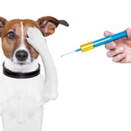 Detroit Dog Rescue hosts a free vaccine clinic for Detroit dog owners