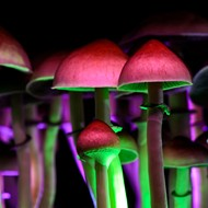 Ann Arbor has decriminalized psychedelic mushrooms and plants