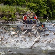 How Asian carp could soon take over the Great Lakes — and how they could be stopped