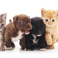 Adopt a pet for free with 'Empty the Shelters' April 29