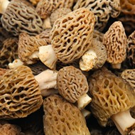 The dos and don'ts of foraging and feasting morels