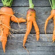 Meijer offering 'misfit' produce to help combat food waste