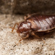 Detroit lands No. 7 spot on list of cities with worst bed bug infestations
