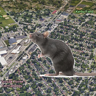 Grosse Pointe will fight rat problem around its DPW site... by moving it to Detroit