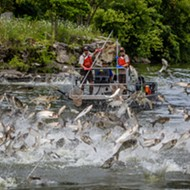 Snyder wants Great Lakes states to fight Asian carp since Trump is useless