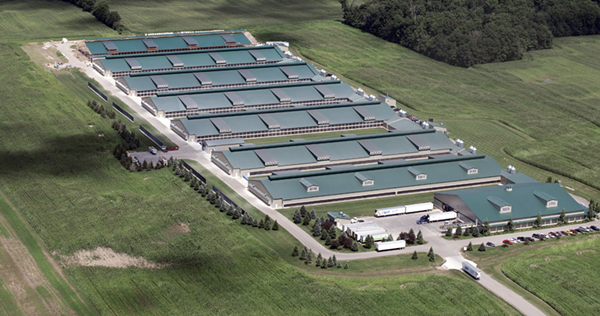 Herbruck's Farm. Each shed holds around 190,000 birds. To put the size in perspective, reference the semi-trailers just below the sheds. Note that there are zero birds outdoors. - CORNUCOPIA INSTITUTE