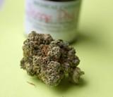 "Marijuana strain ""Snoop Dogg OG"" - BY STEVE NEAVLING"