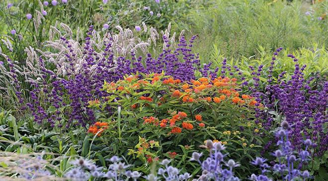 Piet Oudolf's Vlinderhof garden in the Netherlands. - PIET OUDOLF COLLECTION / FACEBOOK