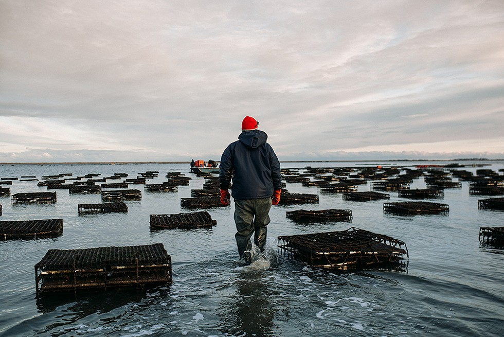 A December sunset at Massachusetts' Island Creek Oysters. - COURTESY OF ISLAND CREEK OYSTERS