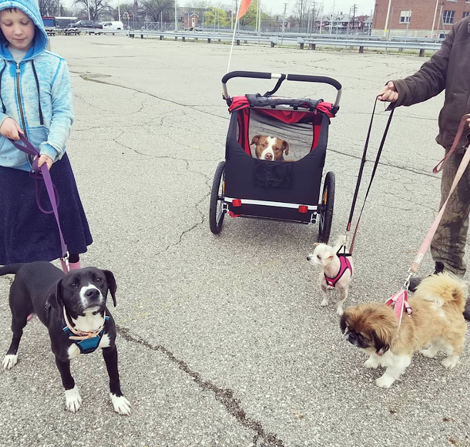 Rhino in a stroller, surrounded by her doggie friends. - REBEL DOGS DETROIT