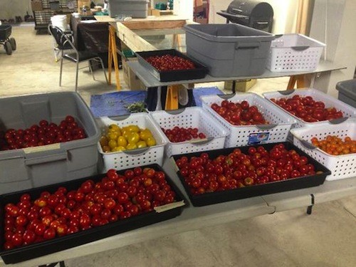 Buyers can expect tomatoes like these at today's market. - COURTESY GROWTOWN