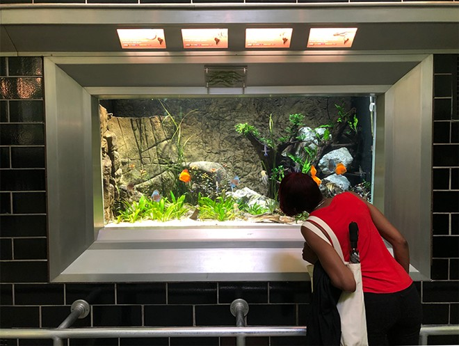 The Belle Isle Aquarium will reopen to the public Friday, July 16. - LEE DEVITO