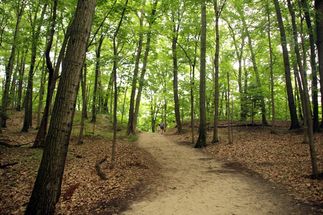 Winding trail through the forest in a Michigan state park. - SHUTTERSTOCK