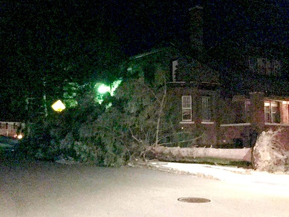 Image from last night shows a downed tree at Ashland and Korte on the east side. - READER PHOTO