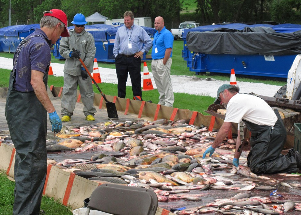 Fish-sorting and disposal operations after rotenone poisoning in May, 2010. - LT. DAVID FRENCH./U.S. COAST GUARD
