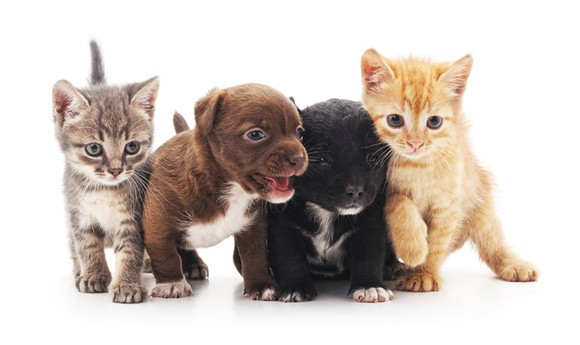 The most adorable kitties and puppies that you've ever seen. - SHUTTERSTOCK
