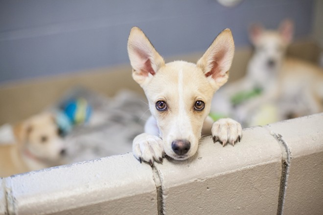 """How can you say """"no"""" to that face? - SHUTTERSTOCK"""