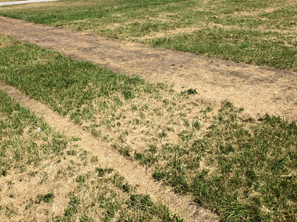 Grass that sat below one of the grandstands. - PHOTO BY TOM PERKINS