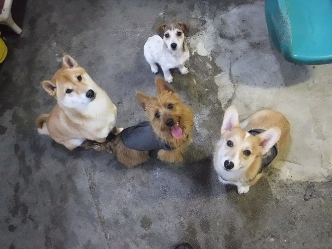 Look at these good boys and girls. - CANINE TO FIVE